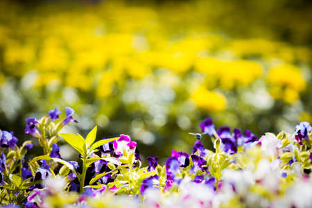 flora: Flora Stock Photo