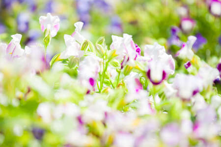 snapdragon: Flora 7