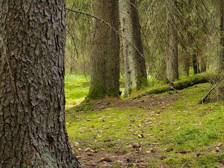 Forest, photo was taken in Poland photo