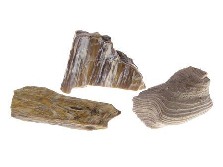 origin: Petrified Wood. Origin: Poland, studio isolated photo