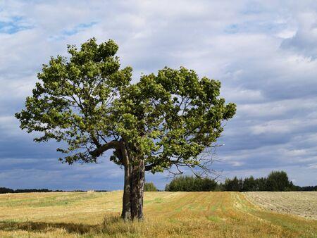 Polish Landscape photo