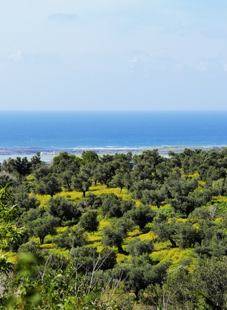 Green Israel photo