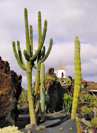 manrique: Jardin de Cactus, Lanzarote, Canary Islands, Spain Stock Photo