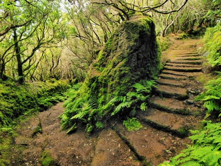 Anaga Mountains and Forest, Tenerife, Canary Islands, Spain photo