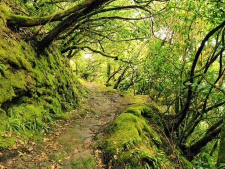 Anaga Mountains and Forest, Tenerife, Canary Islands, Spain Stock Photo - 16680910