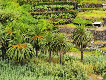 vallehermoso: Hermigua, La Gomera, Canary Islands, Spain Stock Photo