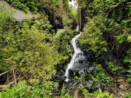 vallehermoso: Garajonay National Park, La Gomera, Canary Islands, Spain Stock Photo