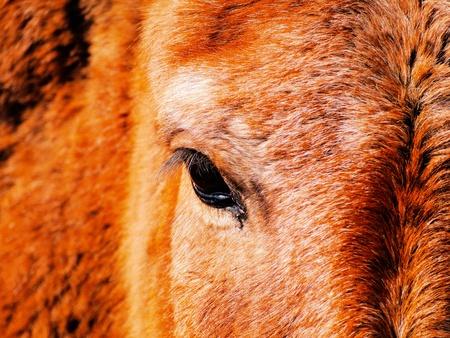 Horse Eye  photo