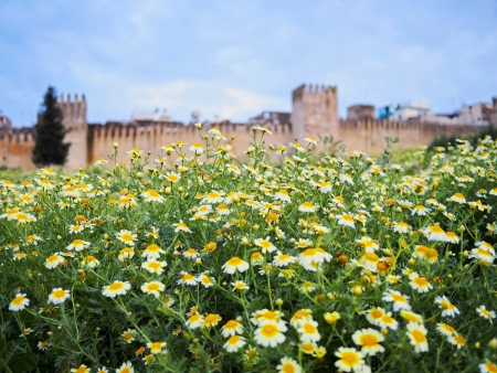walled: Flowers in front of the walls of the old medina of Fes, Morocco, Africa Stock Photo