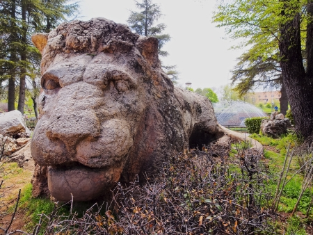 Lion Sculpture  in Ifrane, Morocco - city in the Middle Atlas, coldest place in Africa