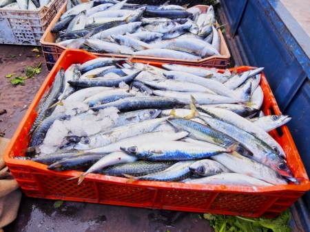Fresh Fishes in the harbor of Rabat, Morocco, Africa