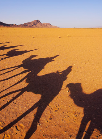 camel silhouette: Riding Camels on Zagora Desert in Morocco, Africa
