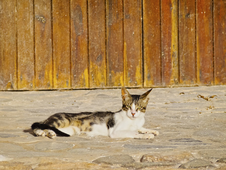 Beautiful Lazy Cat Relaxing in Binibeca Vell on Menorca, Balearic Islands, Spain photo