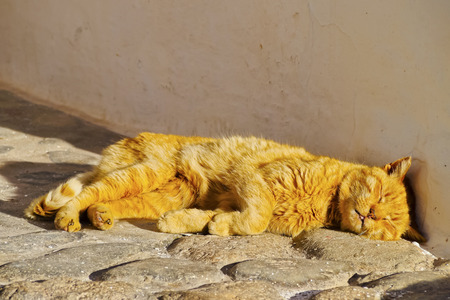 Beautiful Red Cat Relaxing in Binibeca Vell on Menorca, Balearic Islands, Spain photo