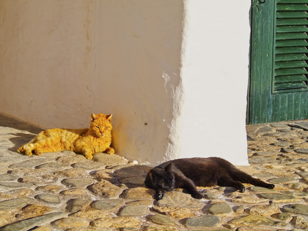 Beautiful Lazy Cats Relaxing in Binibeca Vell on Menorca, Balearic Islands, Spain photo