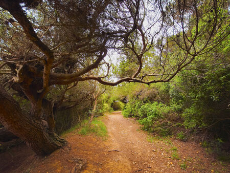 Forest in the Southern part of Menorca, Balearic Islands, Spain photo