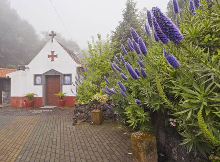 Portugal, Madeira, Echium candicans known as Pride Of Madeira in front of the chapel in Ribeiro Frio