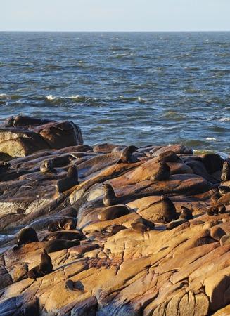 rocha: Uruguay, Rocha Department, Cabo Polonio, Colony of the Sea Lions on the rocky coast.