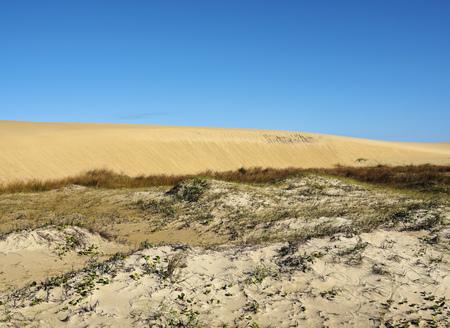 rocha: Uruguay, Rocha Department, Cabo Polonio, View of the dunes.