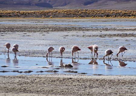 Bolivia, Potosi Departmant, Nor Lipez Province, View of the Laguna Yapi.