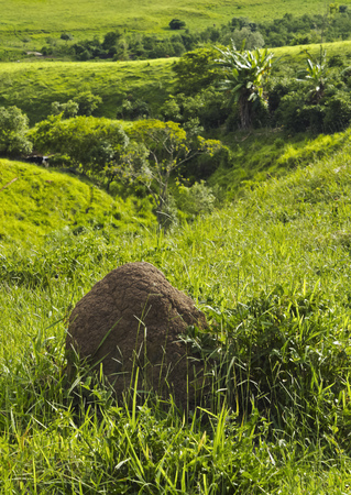 Brazil, State of Minas Gerais, Heliodora, View of the Termite Mound.