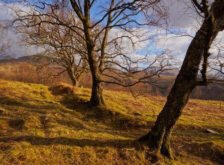 roy: UK, Scotland, Highlands, Forest of the Roy Bridge. Stock Photo