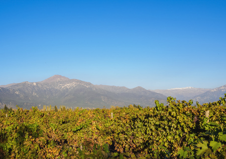 Vineyard with Andes in the background, Pirque, Santiago Metropolitan Region, Chile Stock Photo