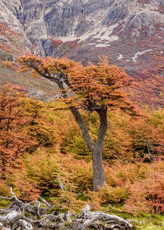 Autumn in Los Glaciares National Park, Santa Cruz Province, Patagonia, Argentina Stock Photo