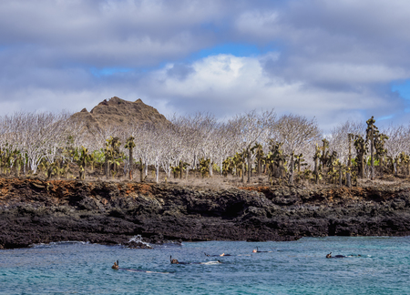 Snorkelling in the Dragon Hill area, Santa Cruz or Indefatigable Island, Galapagos, Ecuador Stok Fotoğraf