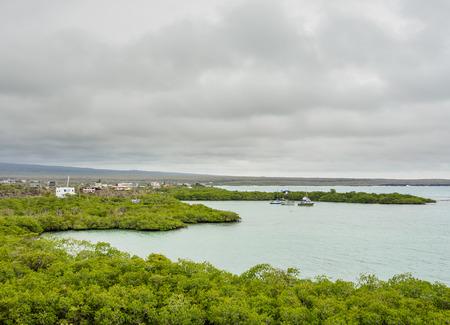 View over Mangrove Forest towards Puerto Ayora, Santa Cruz or Indefatigable Island, Galapagos, Ecuador
