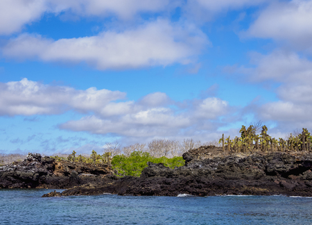 Landscape of the Dragon Hill area, Santa Cruz or Indefatigable Island, Galapagos, Ecuador Stok Fotoğraf