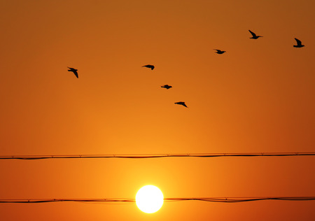 afterglow: Afterglow of birds