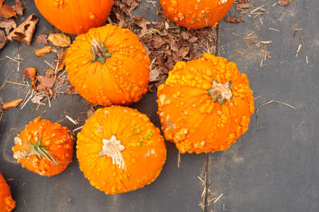 Pumpkins. For sale here, ahead of the upcoming Halloween holiday, at a farm in New Jersey, USA Stock fotó - 108107854