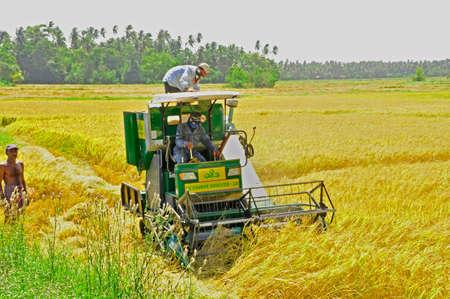 Harvesting grain here on a farm in the Southern countryside of Sri Lanka Sajtókép