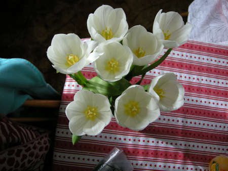 Tulips (Gen Tulipa). Decorating this table in a glass vase, England