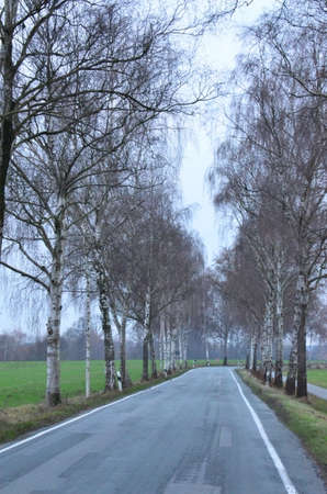 Tall trees in winter, here in the countryside of Westphalia, Germany