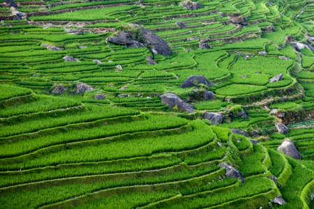 gradas: China Guilin Rurales Village Terrazas de Arroz