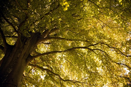 Sunrise glow on a tree Stock Photo - 13294926