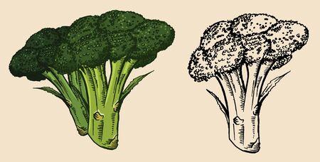Broccoli vector Stock Vector - 17871252