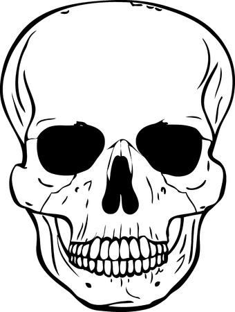 cranium: Cranium VECTOR Illustration