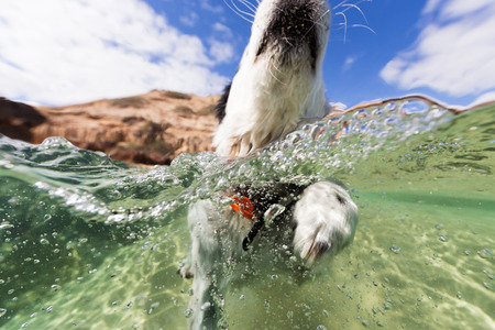 An action underwater shot of a dog swimming in the sea on a summers day at the beach. 版權商用圖片