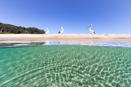 Pelicans rest on the sandy beach above a vibrant, turquoise sea in this beautiful sun drenched seascape.