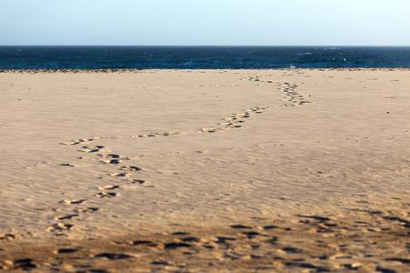 Footprints in the sand on a summer beach winding towards the deep blue ocean and the distant horizon. 版權商用圖片