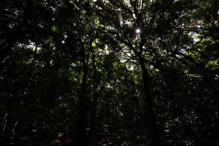 The sun shines through the tree tops into a dark jungle with towering trees.