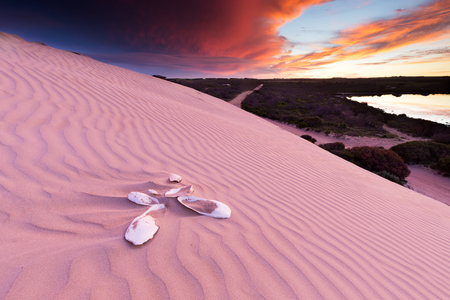 Cuttlefish bones buried in the sand dunes under a beautiful stormy sunset in South Australia.