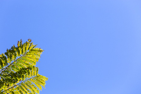 Two green fronds from a tropical tree against a sunny, clear, blue spring sky background with space for content or text. 版權商用圖片