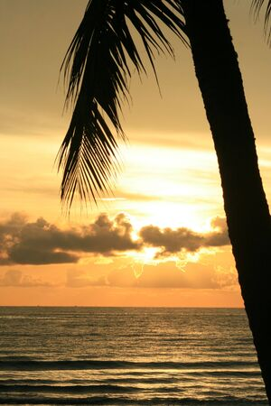 Sunset over the sea under a palm tree, Thailand. Stock Photo - 6187757