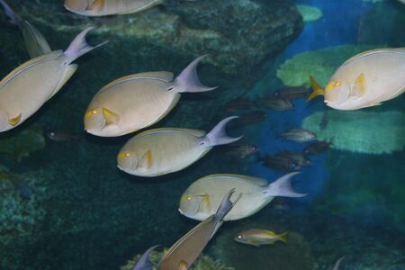 Tropical fish, Thailand. photo