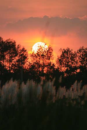 Sunset over plants, Thailand. Stock Photo - 8611708