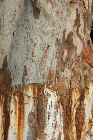 Tree trunk. Stock Photo - 9507123